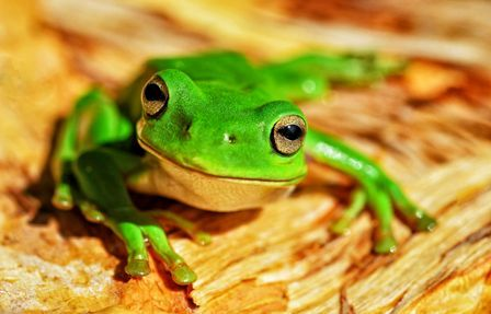 Syndrom gotującej się żaby