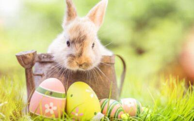 Wielkanoc – jak dodać sobie energii?